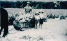 1931 Bert Evans with sons Jim and David, Beerburrum_1