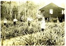 Bill Wilkinson farm lot 682 Red Road Beerburrum c.1922_1
